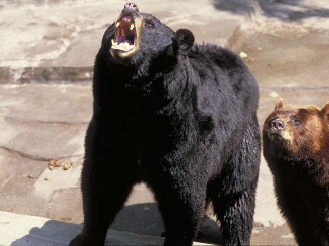 クマの画像 p1_34
