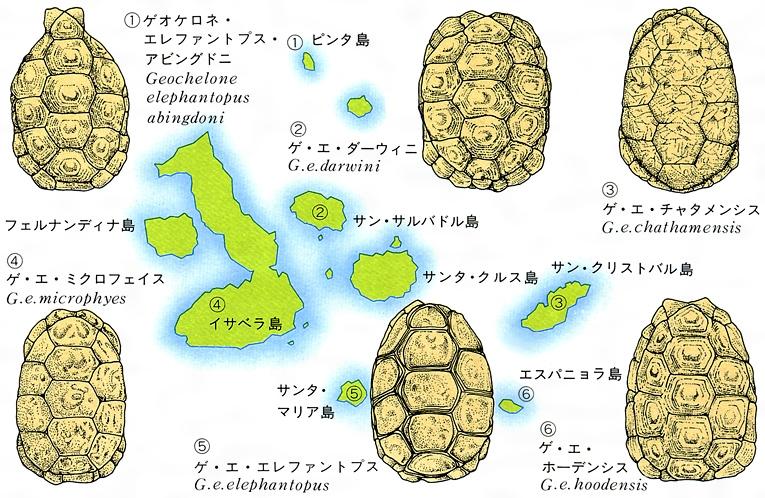 ガラパゴス諸島の画像 p1_32
