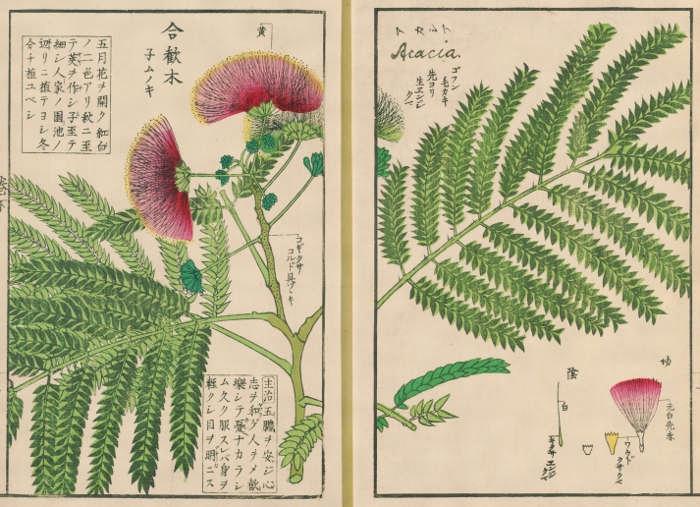 川原慶賀の画像 p1_38
