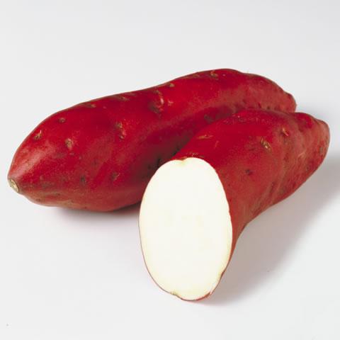 薩摩芋/甘藷(サツマイモ)とは -...