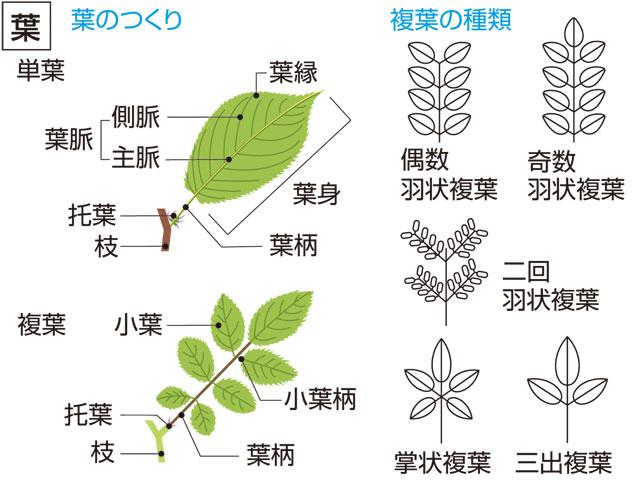 葉とは - コトバンク