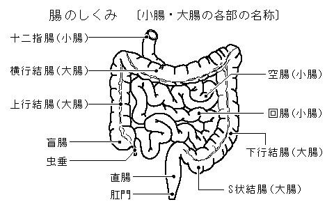 「消化 管 イラスト 無料」の画像検索結果