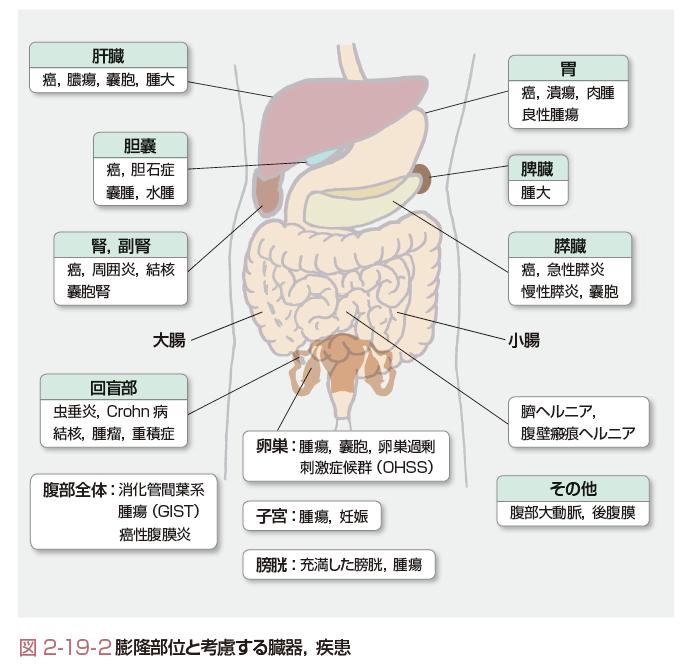 腹部膨隆とは - コトバンク
