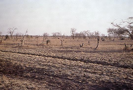 「砂漠 乾燥」の画像検索結果