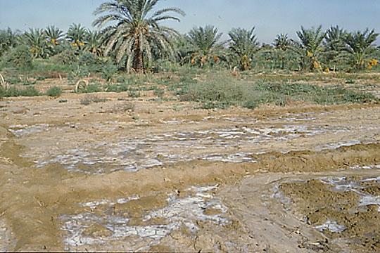 砂漠(読み)さばく(英語表記)desert