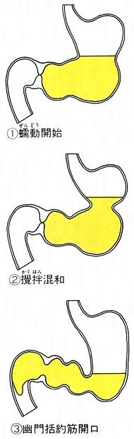 胃(い)とは - コトバンク