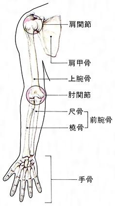 物を持つと肘の外側が痛い! 上腕骨外側上顆炎(テニス肘) | 古東整形外科・内科