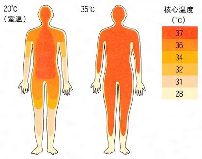 「外殻温度 核心温度」の画像検索結果