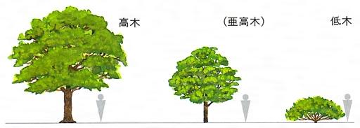 樹形(ジュケイ)とは - コトバン...