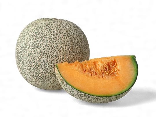 メロン(読み)めろん(英語表記)melon