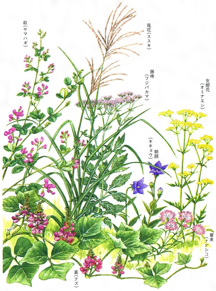 七草 尾花 の 秋