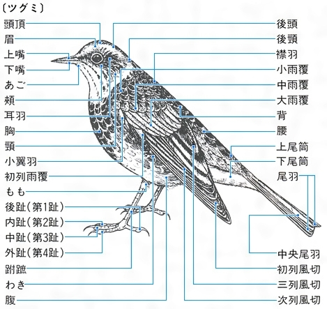 魔物/怪鳥 - MHFO 台灣版 Wiki - アットウィキ