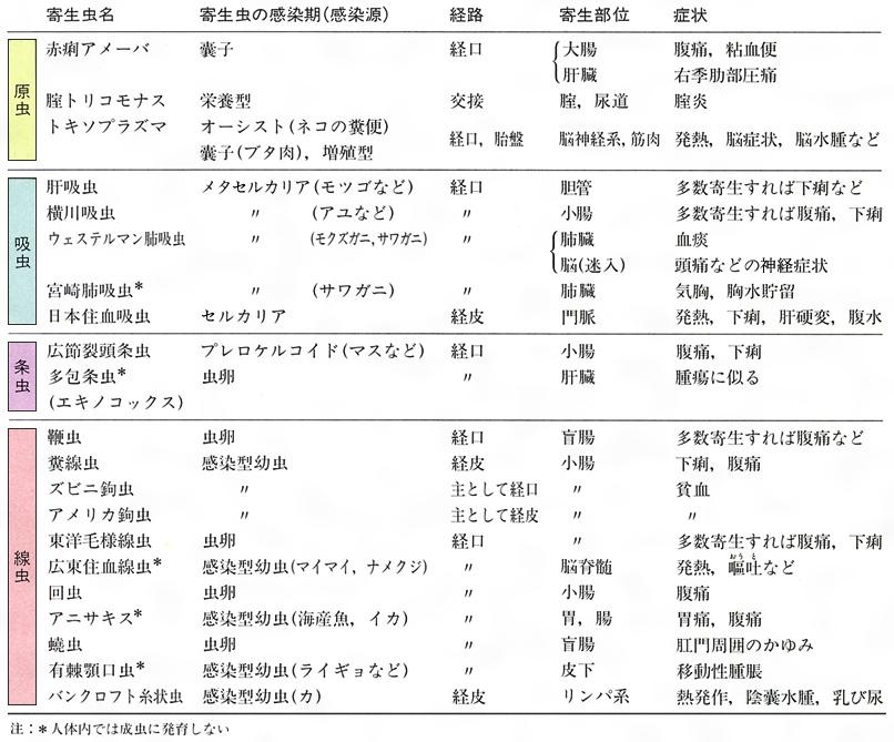 エキノコックス症 (エキノコックスしょう) - Japanese-English ...