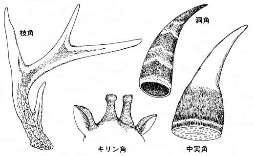 角(つの)とは - コトバンク
