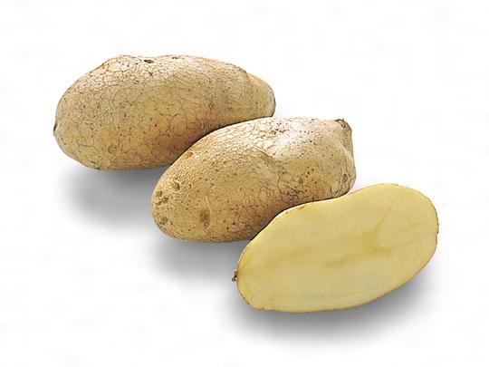 ジャガイモ(英語表記)Solanum tuberosum; potato