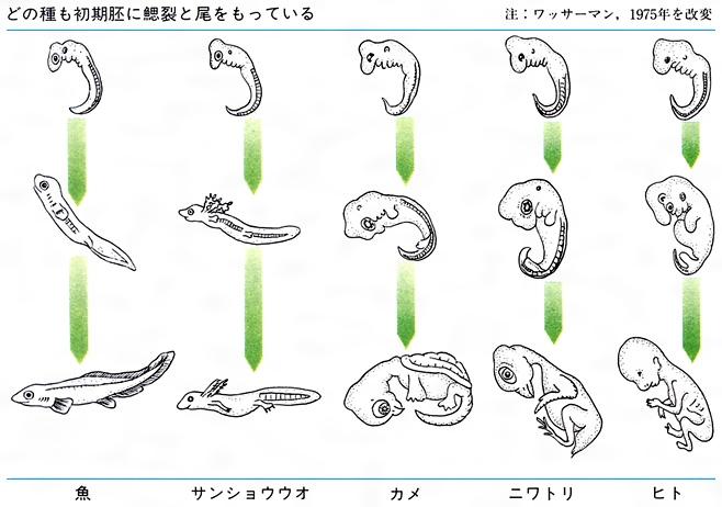 進化(しんか)とは - コトバンク