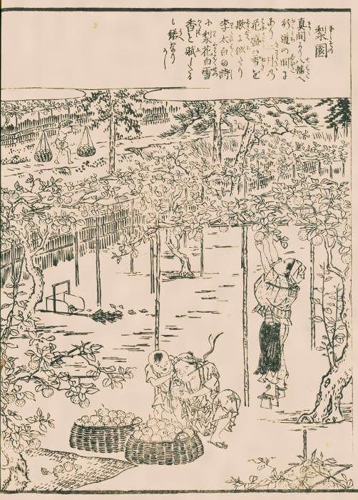 江戸名所図会(読み)えどめいしょずえ