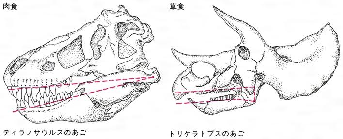 恐竜(きょうりゅう)とは - コト...