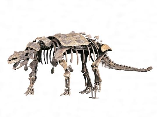 よろい竜類(よろいりゅうるい)とは - コトバンク